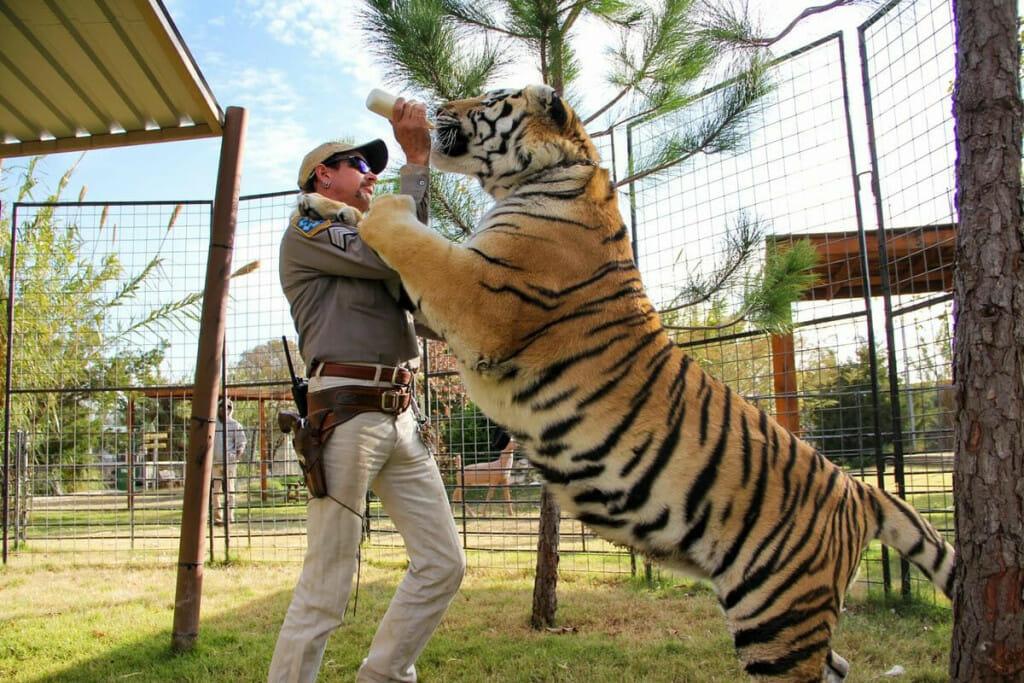 tigers joe exotic